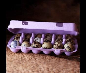 18er Wachteleierschachtel Karton - Lavender